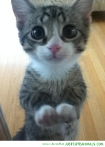 cute-animals-cat-kitten-begging-pics