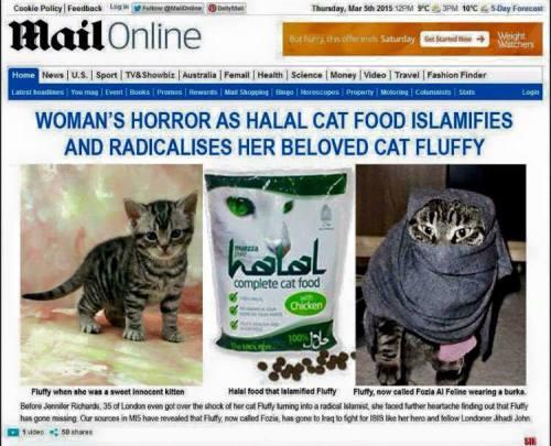 muslim cat